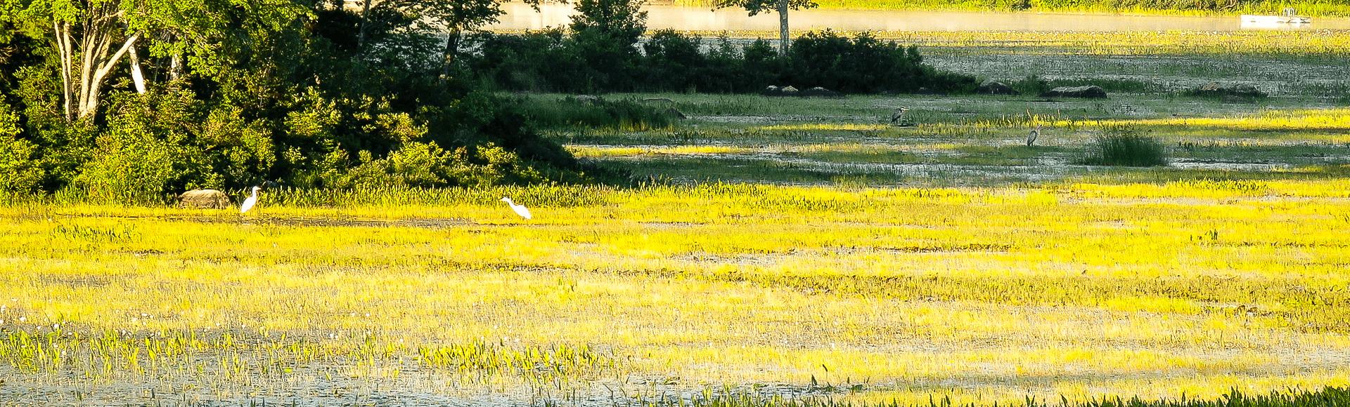 Summer on Lees Pond
