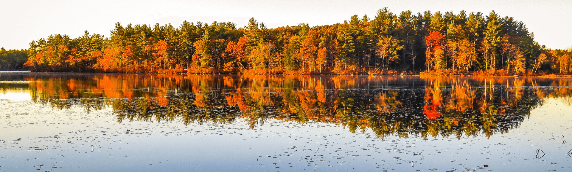 Fall on Lees Pond